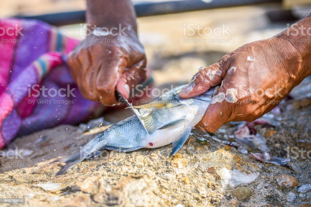 Closeup to fisher's hands cleaning the fresh fish stock photo