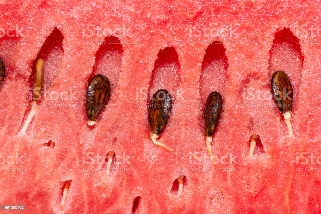 closeup to watermelon slices with seeds stock photo
