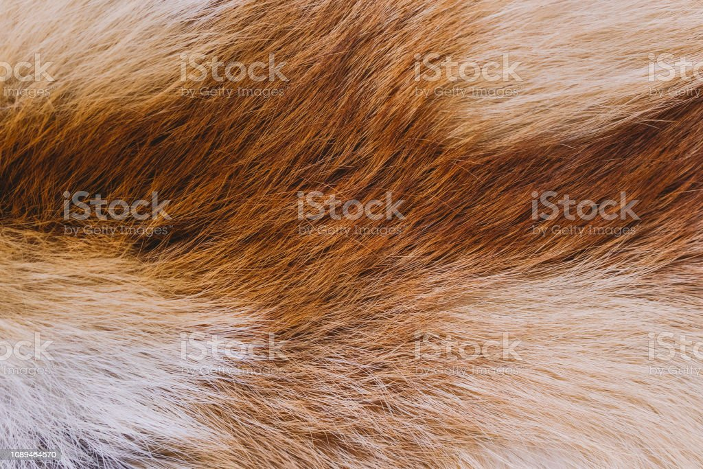 Closeup top view of fluffy texture of colorful real fox animal fur....