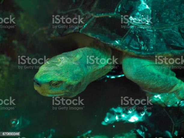 Closeup turtle in the temple park picture id670693346?b=1&k=6&m=670693346&s=612x612&h=hqzqhpwfmee4rc9akkp6dnlpyve1ri0elb3k4krrxzg=