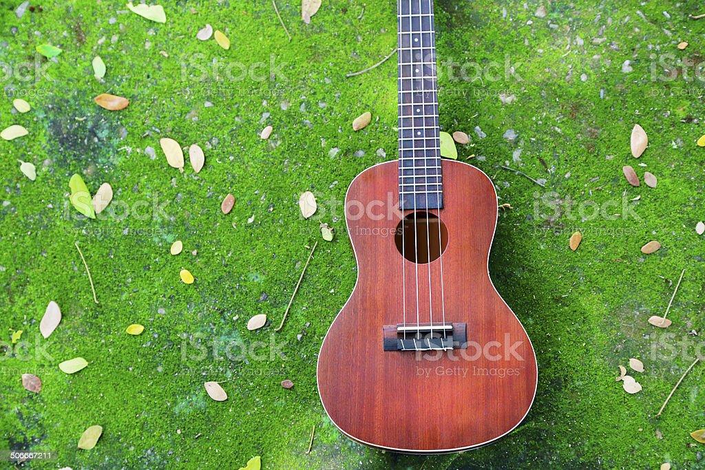 Closeup ukulele put on a moss green. stock photo