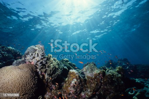 istock Close-up underwater shot of a colorful reef 157694566
