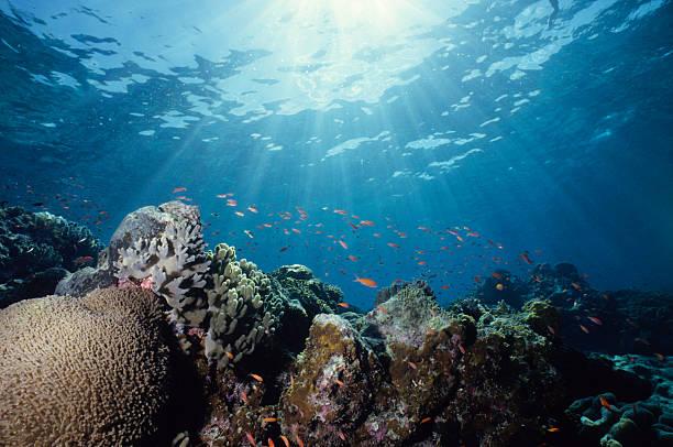 Close-up Schuss von einem bunte Unterwasser Riff – Foto