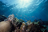 クローズアップ写真、水中のカラフルな珊瑚礁