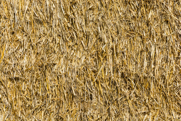 Close-up view of a bale of straw stock photo
