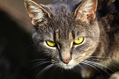 Close-up view of a grey cat with green eyes. Defocussed dark background