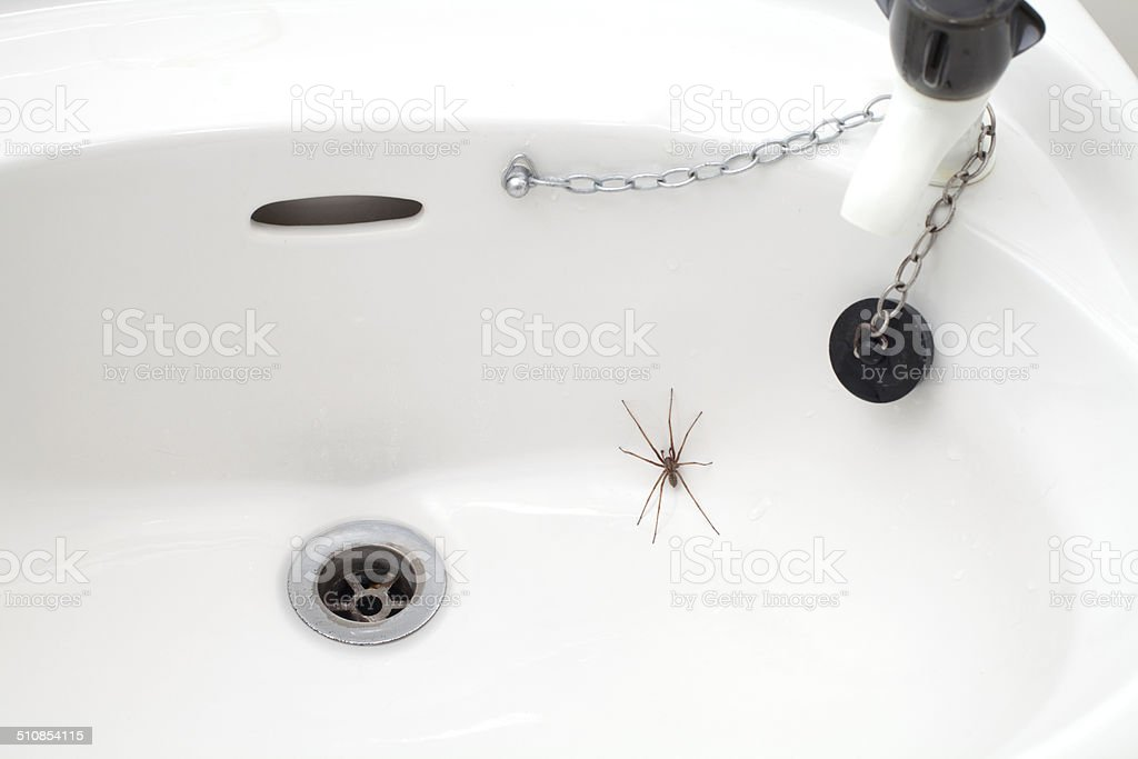 Close-up view of a spider in the bathroom sink stock photo