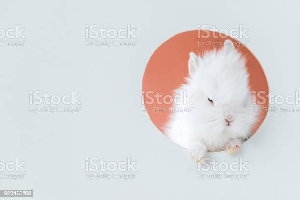Closeup view of adorable white furry rabbit in hole on grey picture id923462568?b=1&k=6&m=923462568&s=612x612&h=gfk9telcy ywawg6nrdz0b1rh ac0zellvk98tof4to=