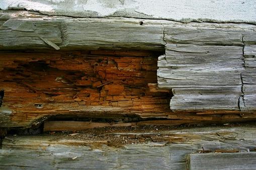 Old log wall