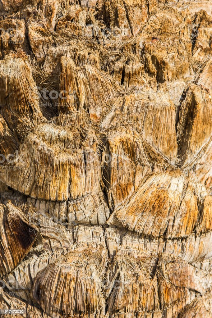 Closeup View Of Brown Palm Tree Stem Texture Stock Photo Download Image Now Istock