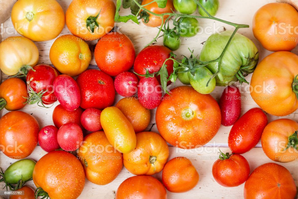 Close-up view of fresh tomatoes. Young juicy tomatoes. A lot of tomatoes. Summer agriculture farm market tray full of organic tomatoes with water drops stock photo
