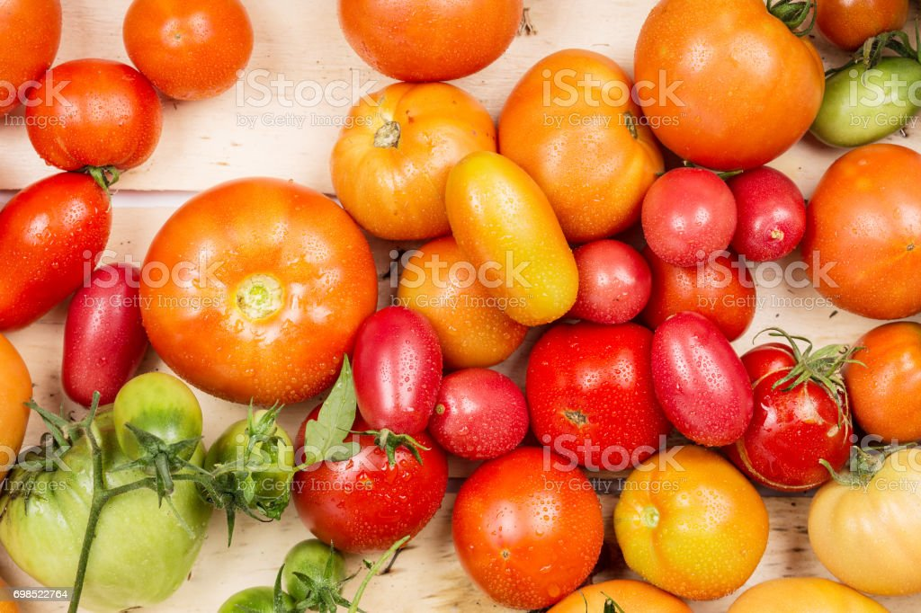 Close-up view of fresh tomatoes. Young juicy tomatoes. A lot of tomatoes. Summer agriculture farm market tray full of organic tomatoes stock photo