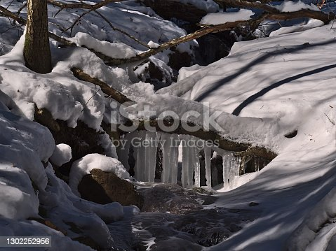 istock Closeup view of frozen mountain stream flowing below the roots of a tree with icicles surrounded by snow in winter season near Todtnau, Germany in Black Forest. 1302252956