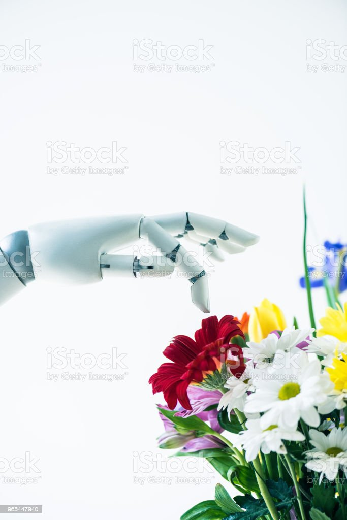 close-up view of hand of robot and beautiful flower bouquet isolated on white zbiór zdjęć royalty-free