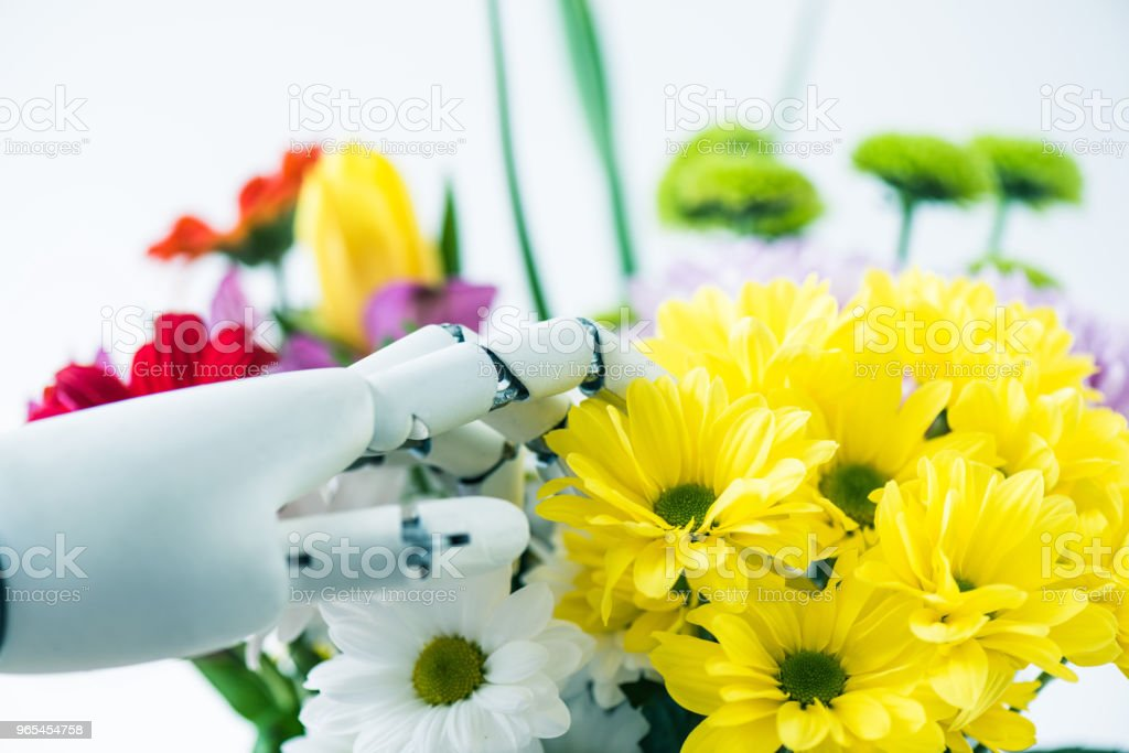 close-up view of hand of robot and beautiful flowers on white zbiór zdjęć royalty-free