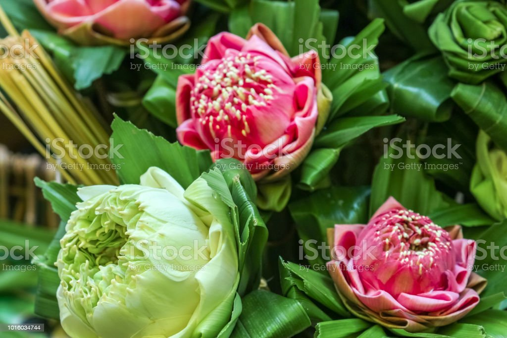 Closeup View Of Lotus Flower With Folding Leaf To Respect To Lord