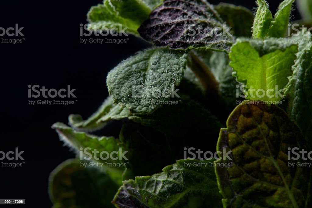closeup view of mint leaves isolated on black background royalty-free stock photo