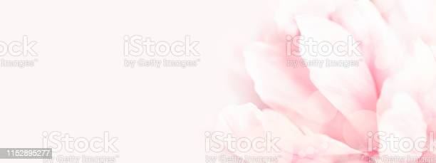 Photo of Closeup view of pink peony flower.
