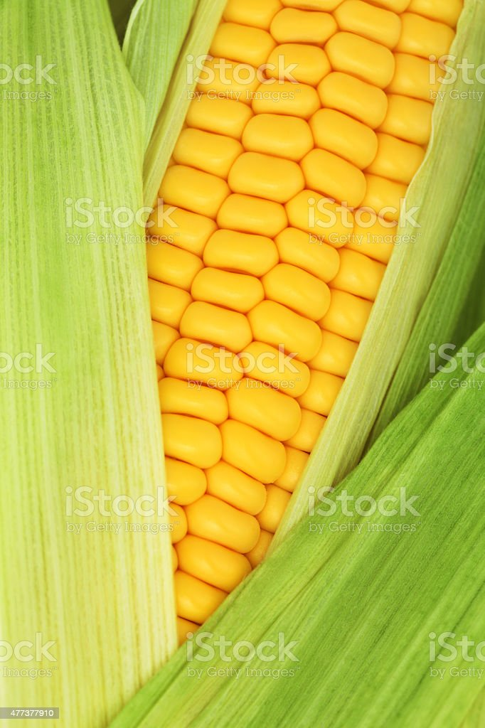 Close-up view of ripe corn on the cob among leaves stock photo