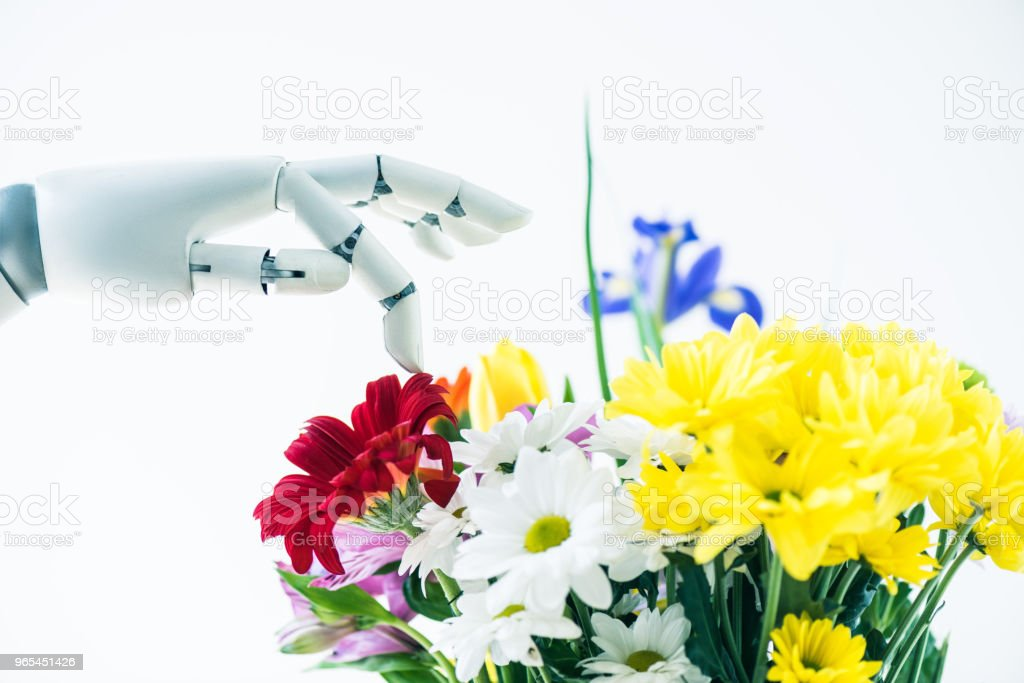 close-up view of robotic arm and beautiful colorful flowers isolated on white royalty-free stock photo