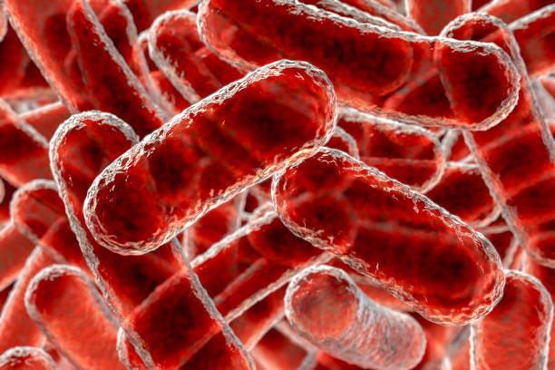 Close-up view of rod-shaped bacteria Close up view of rod shaped bacteria, 3D illustration bifidobacterium stock pictures, royalty-free photos & images