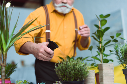 close-up view of senior man holding spray bottle and watering potted plants at home