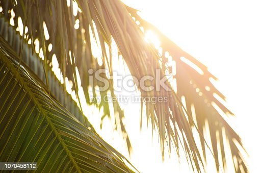 istock Close-up view of some palm's leaves illuminated by a beautiful sunset. 1070458112