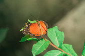 Butterfly - Insect, Close-up, Pattern, Animal Wildlife, Tropical Climate, Tropical Pattern, Springtime, Orange Color