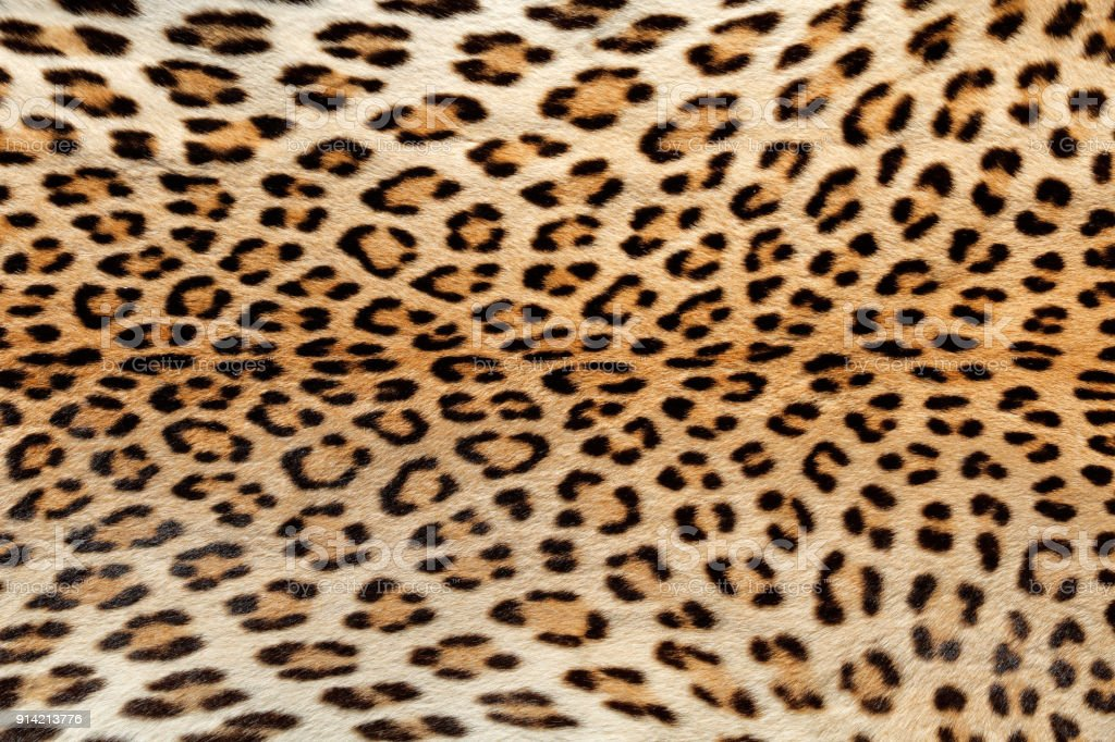 Close-up view of the skin of a leopard stock photo