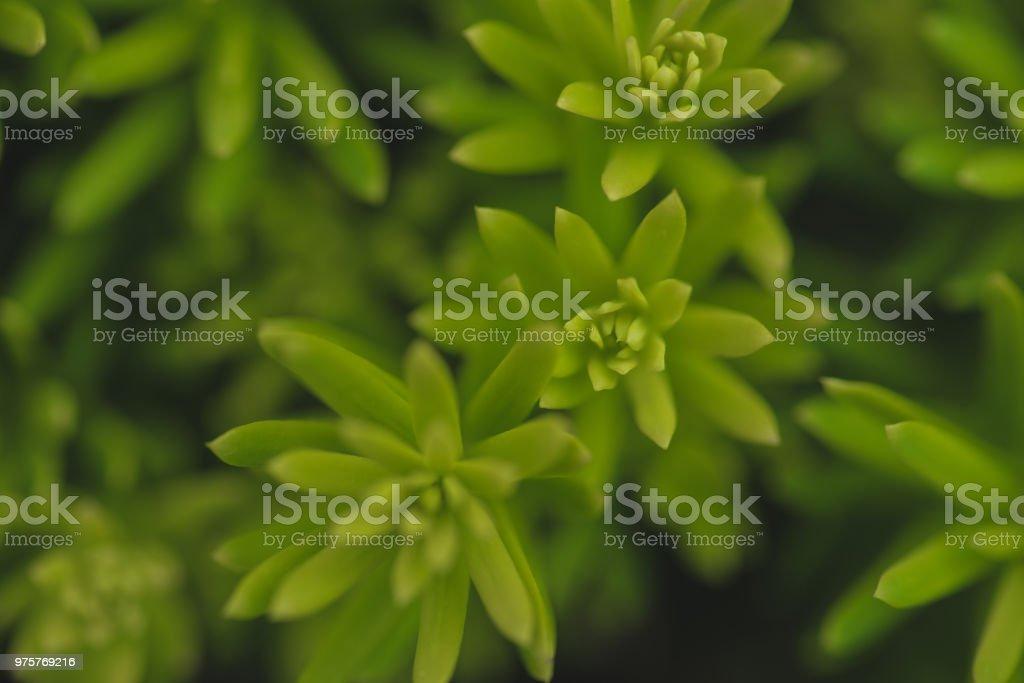 Nahaufnahme von winzigen grünen Pflanze Blätter - Lizenzfrei Biologie Stock-Foto