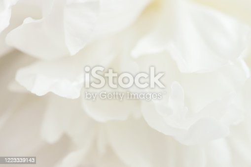 Macro view of white peony flower. Soft pastel wedding background.