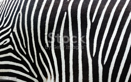 istock Close-up view of zebra stripes 170615172