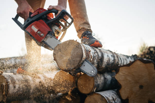 closeup view on chainsaw in strong lumberjack worker hands. sawdust fly apart - tree surgeon stock photos and pictures