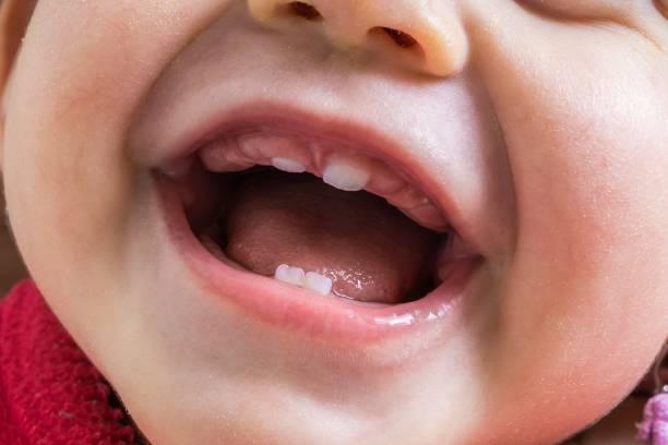 açık ağız bebek portre görünümünde. i̇lk dişler büyüyen. - baby teeth stok fotoğraflar ve resimler