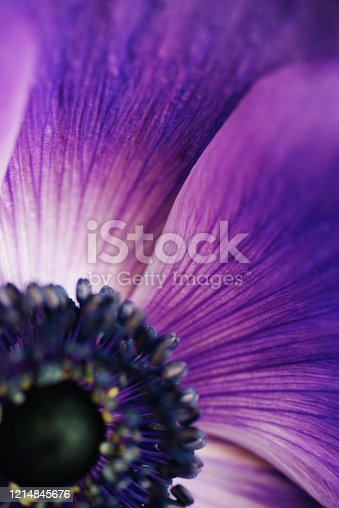 istock Closeup vintage image of beautiful purple flower. Floristic decoration. Floral abstact background. Natural flowers wallpaper or greeting card. Macro view 1214845676