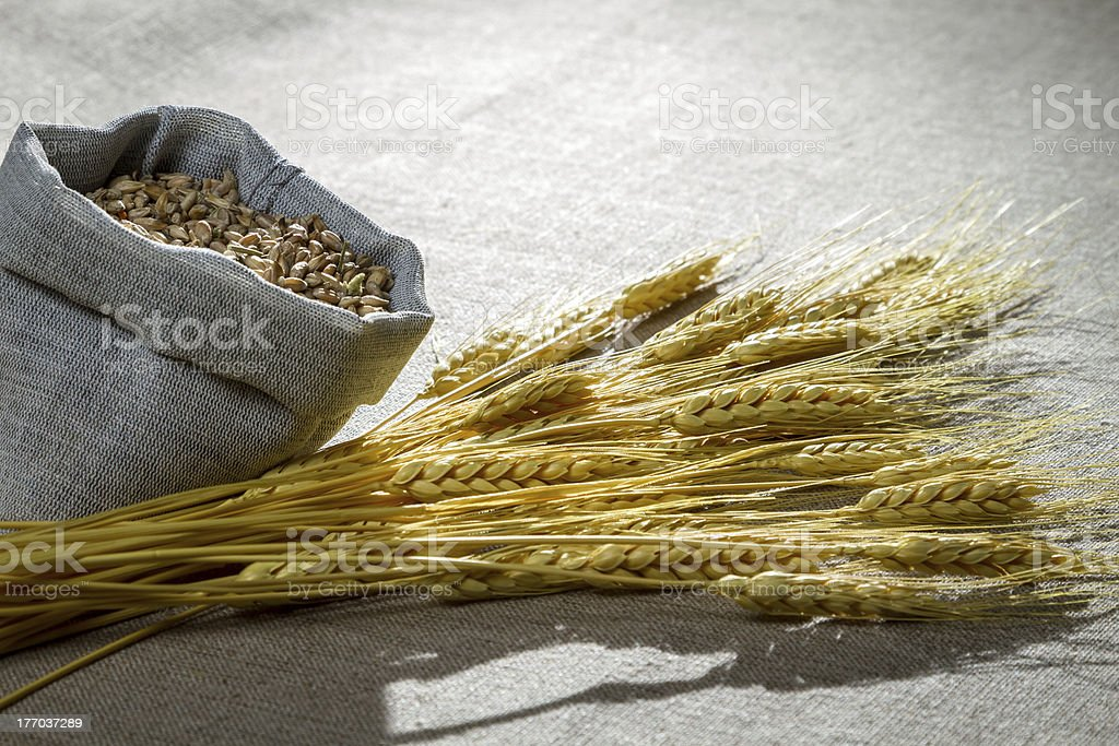 Closeup wheat seed on canvas royalty-free stock photo