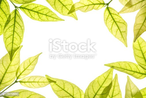 istock Closeup white space at the center of frame by brown leaves isolated on white background 912370850