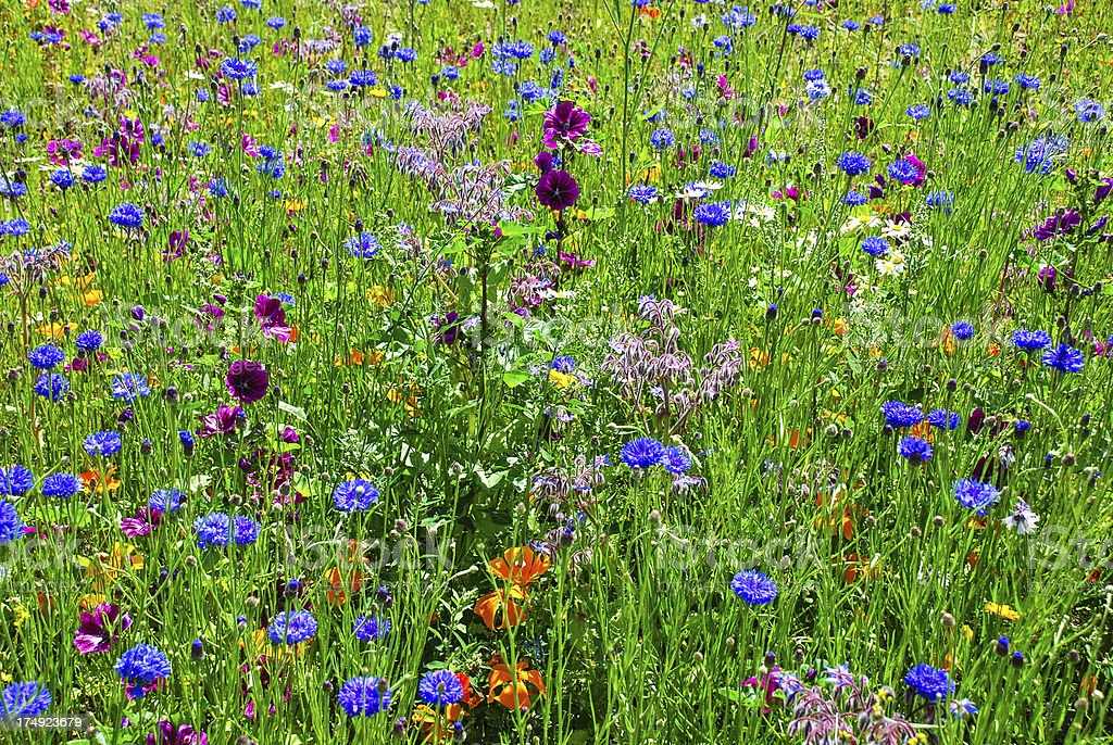Close-up Wildflowers Background royalty-free stock photo