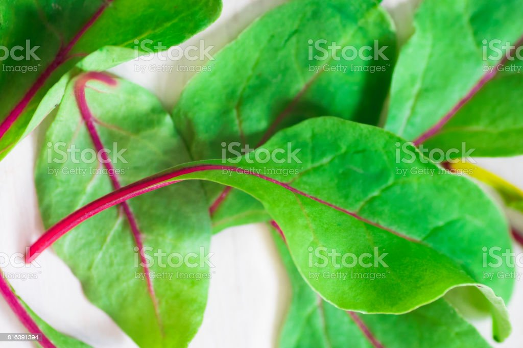 Close-up with fresh young beet leaves stock photo