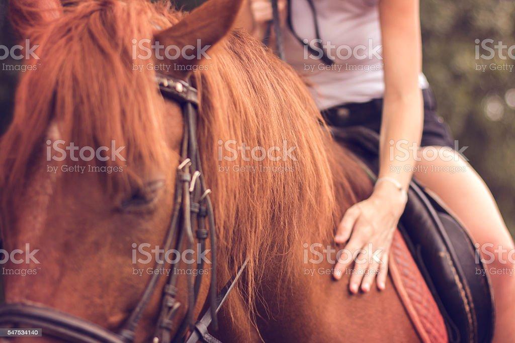 Closeup woman riding horse stock photo