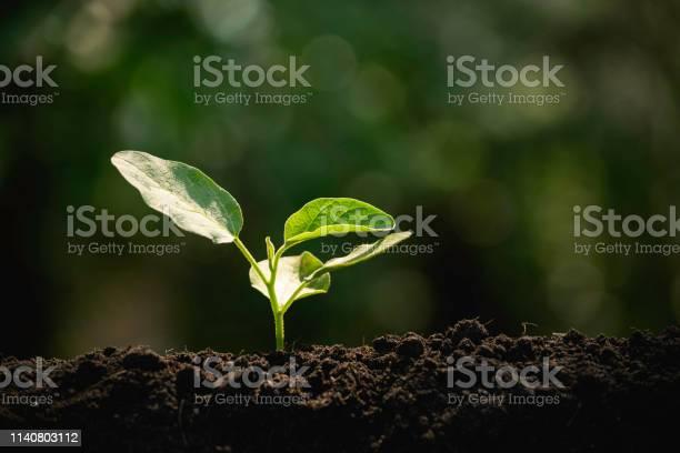 Closeup young plant growing in the soil concept save nature or on picture id1140803112?b=1&k=6&m=1140803112&s=612x612&h=91pzvh6gvqlpcosi7mnphda4ejs3b huexwt m2xx9y=