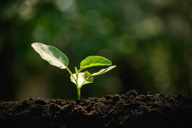 Close-up young plant growing in the soil concept save nature or agriculture on soft green tree background. Close-up young plant growing in the soil concept save nature or agriculture on soft green tree background. ancestry stock pictures, royalty-free photos & images