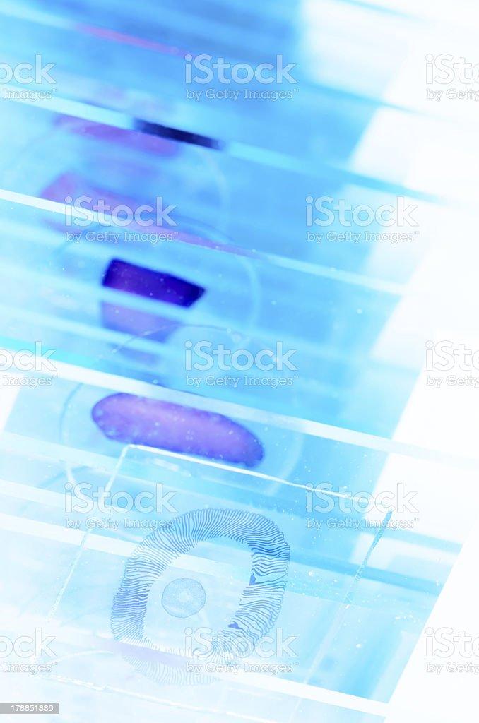 Close-ups of scientific microscope slides stock photo