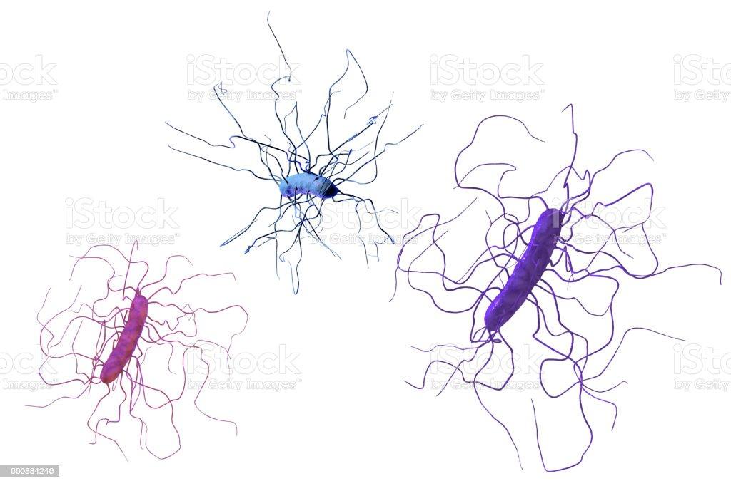 Clostridium difficile bacteria stock photo