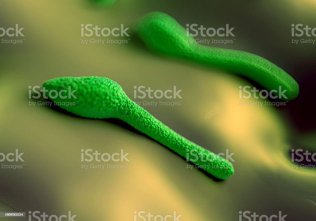 Clostridium tetani bacterium stock photo