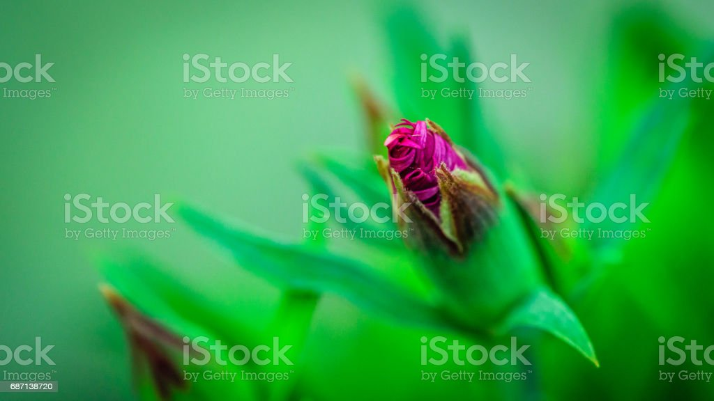 Closup of a bud stock photo