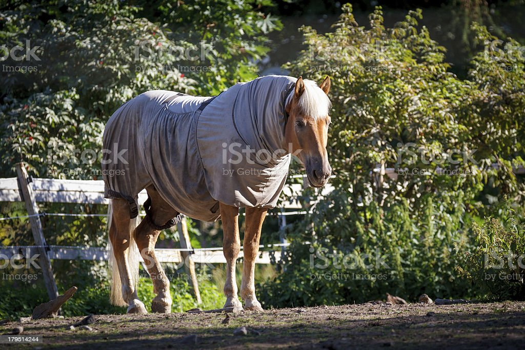 Clothed Horse stock photo