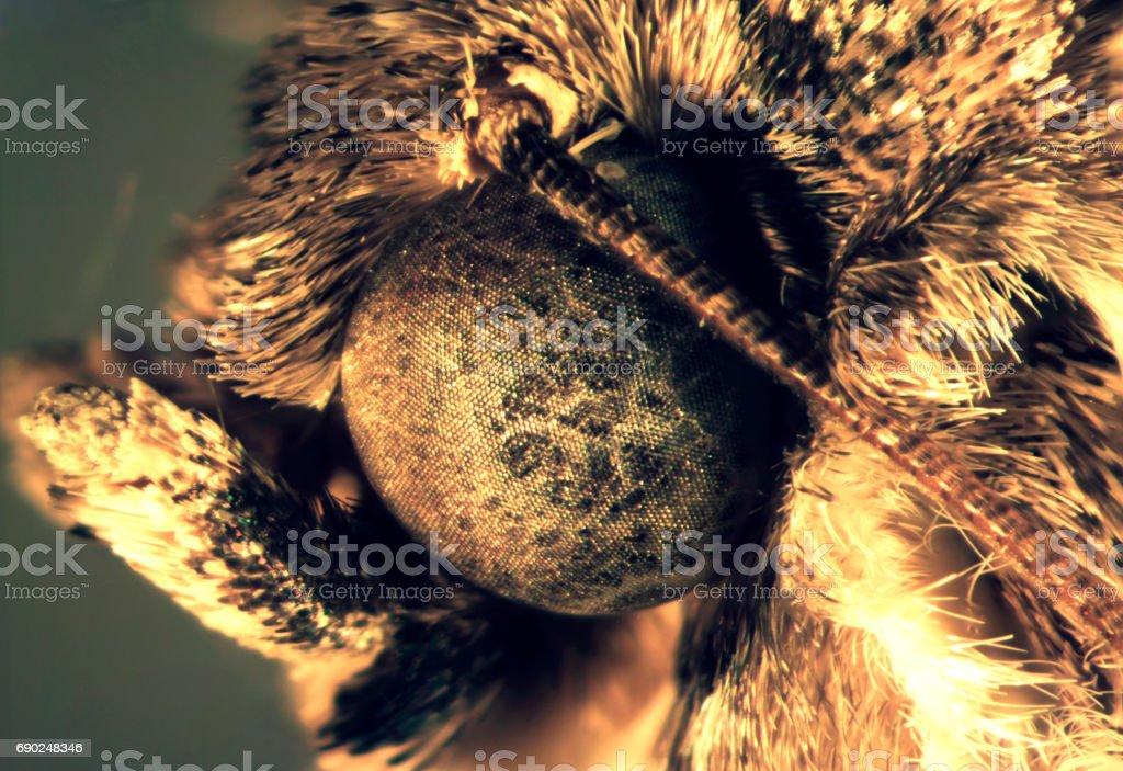 Kleidermotte Auge Bei 40 X Stock-Fotografie und mehr Bilder von ...