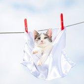 Clothesline with Cat