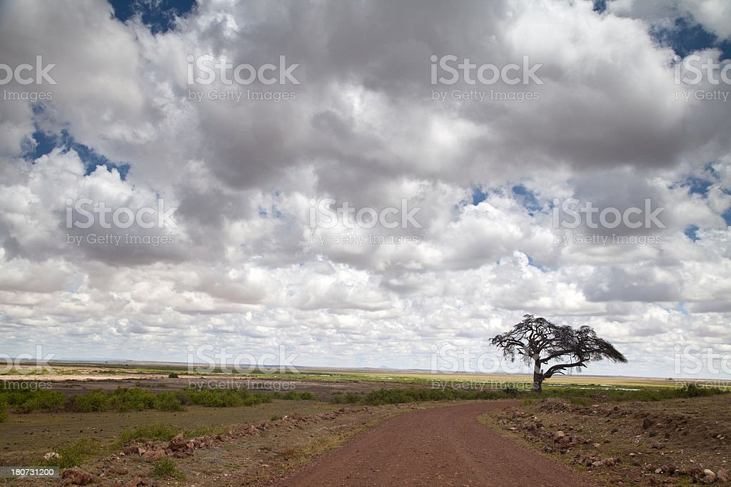 Cloud and Tree stock photo